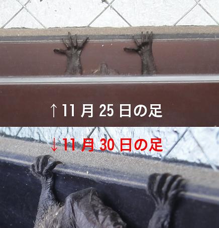 1130bat12